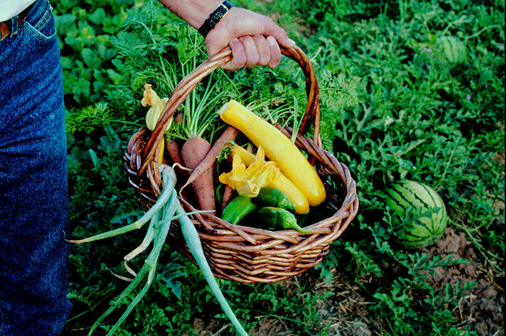 Beginners Guide To Organic Gardening