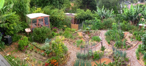 Food Forest: The Ultimate Garden